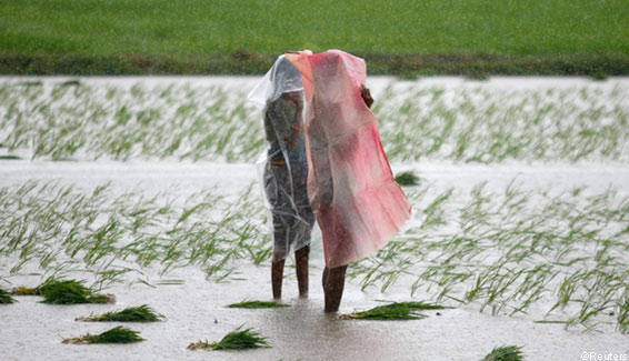 Farmers use plastic sheets to cover themselves by rain on a rice field in Rajpur India